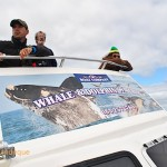 Viewing whales from the top deck of the boat