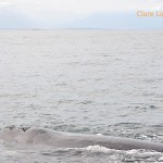 Close to a southern right whale