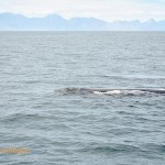 The female whale leaves the party