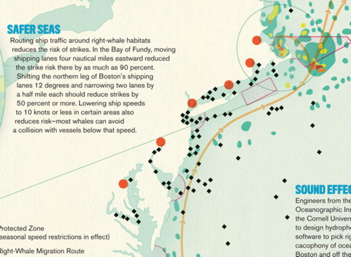 Article: The Atlantic on right whales and ship traffic