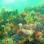 Dense reef life at Roman Rock