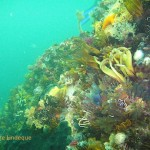 Feather stars and urchins jostling for space