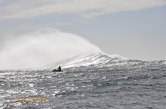 A plume of spray follows the crest of the wave