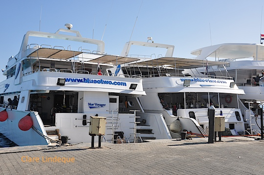 Red Sea 2013 trip report