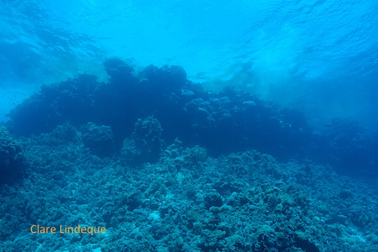 The surface is visible against the top of the reef