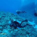 Exploring Shark Reef