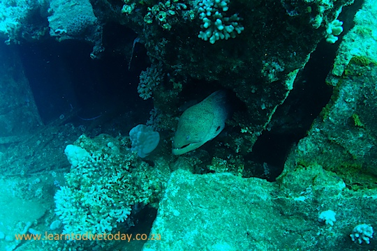 Moray eel under the Chrisoula K
