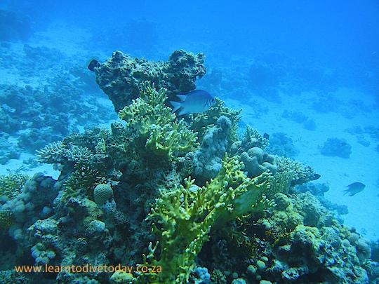 Coral at Poseidon's Garden