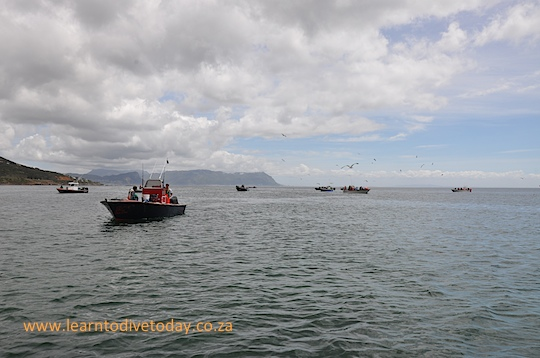 Snoek fishing boats at Miller's Point