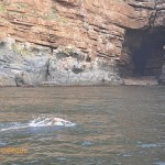 Richard swims past the cave near Cape Point