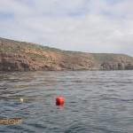 Flotsam near Cape Point