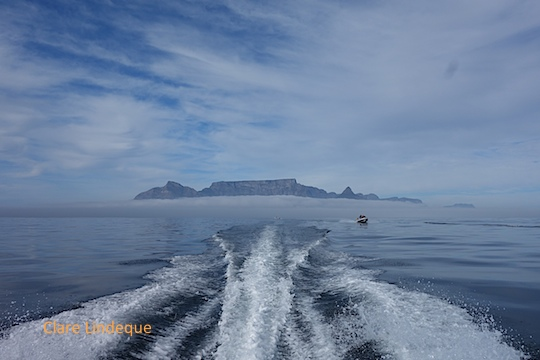 Motoring out to Robben Island - looking back at Table Mountain