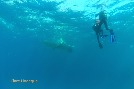 The view from below: beautiful visibility in False Bay