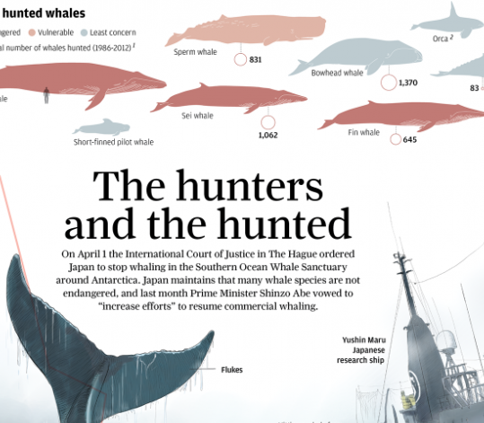 Article (infographic): South China Morning Post on whaling