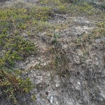 A slope alongside the path is dense with shell fragments