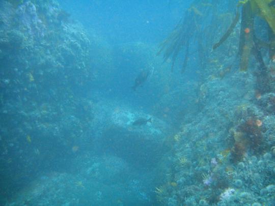 Granite and kelp