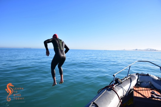 A Day on the Bay: Lighthouse Swim 2015