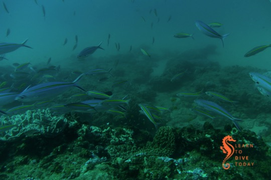 Swimming with the fish at Creche, Ponta do Ouro (southern Mozambique)