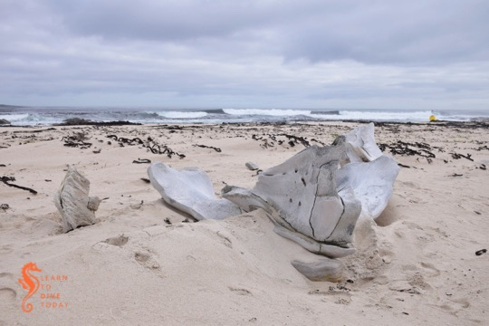 Whale carcass reporting in Cape Town