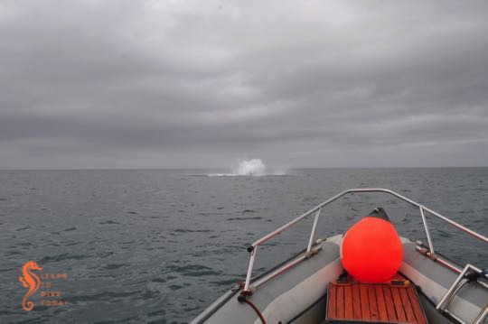 Tail end of a breaching whale
