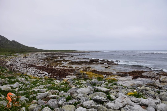 The rocky shore near Gifkommetjie