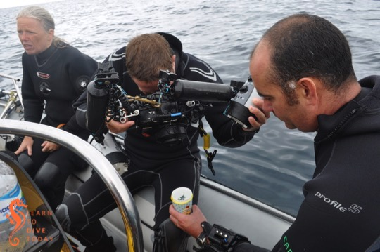 Photographing a sea swallow