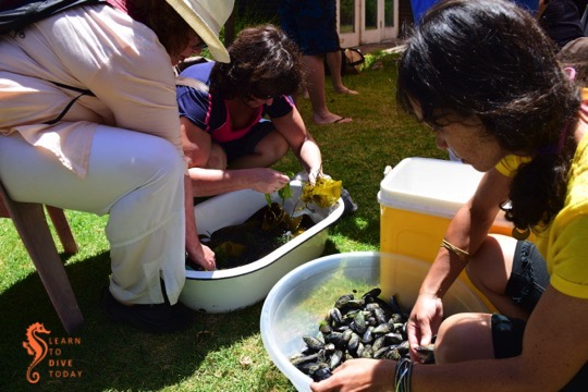 Rinsing and scrubbing the mussels