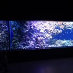 The coral reef tank