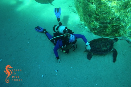 Angie and Bob the green turtle