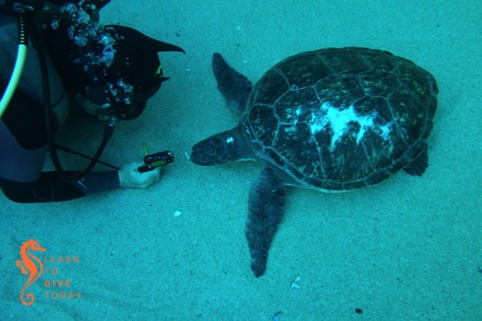 Tony and Sandy the green turtle