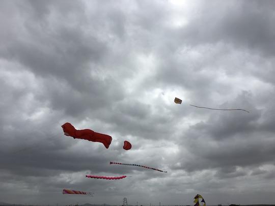 Kites at Koeberg Nature Reserve