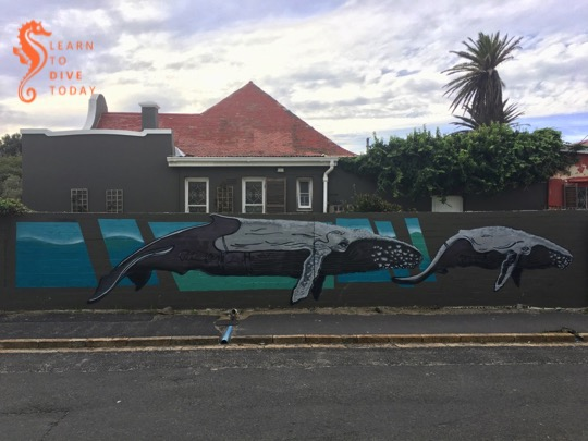 Whales on Rhodesia Road