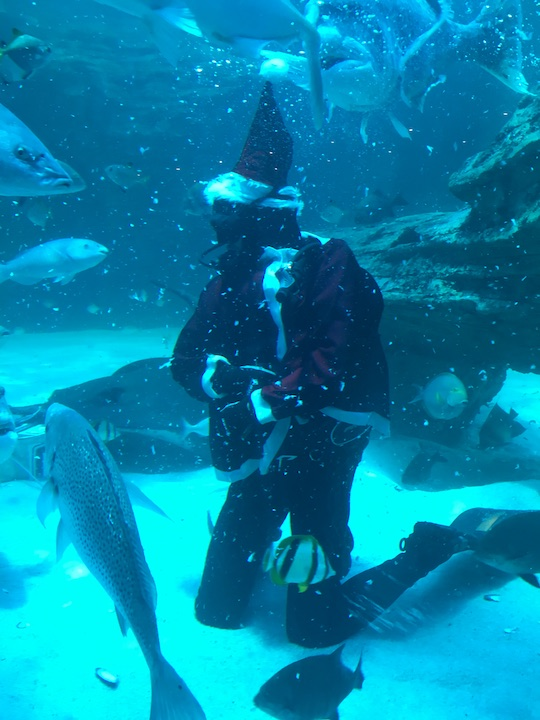 Santa feeding the fish at the Two Oceans Aquarium